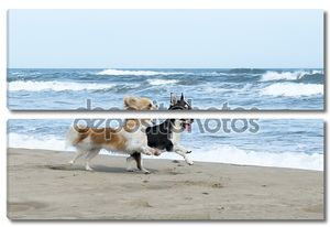 Чихуахуа на пляже