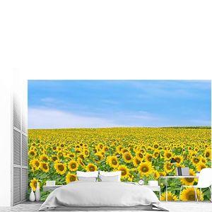поле с подсолнухами цветения на фоне голубого неба