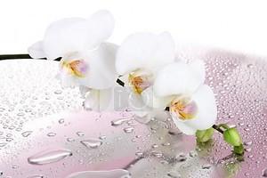Красивая орхидея на розовом фоне