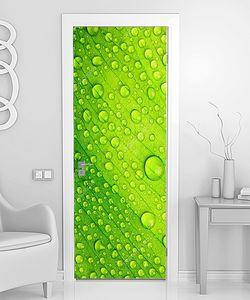 Капли на зеленом листке