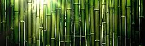 Зеленый бамбук и яркие лучи солнца Bunner