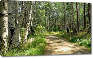 Дорога в смешанном лесу