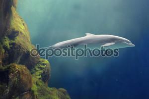 Морская жизнь