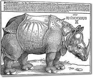 Гравюра с носорогом
