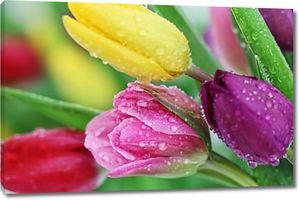 Весенний тюльпан цветы макро