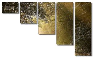 Кантри-роуд в осеннем лесу
