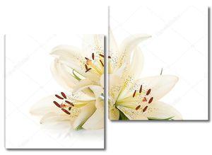 Три белых лилии с зелеными листьями