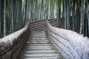 Бамбуковая дорожка