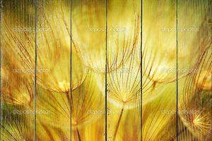 Одуванчика цветы крупным планом