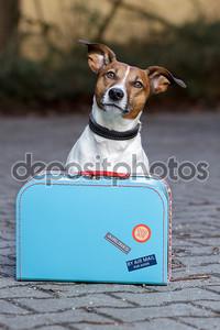 Собака с мешком
