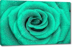 Бирюзовая роза