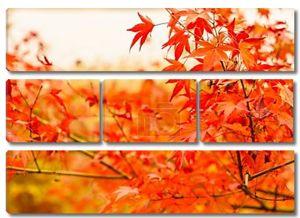 Красивые красочные осенние листья