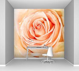 Крупным планом абрикосовая роза