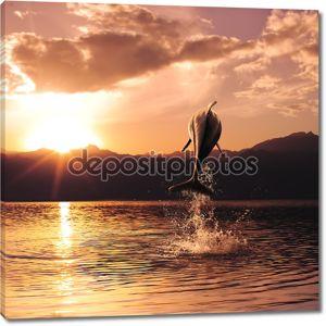 Красивый закат и Дельфин, прыгая из морской поверхности