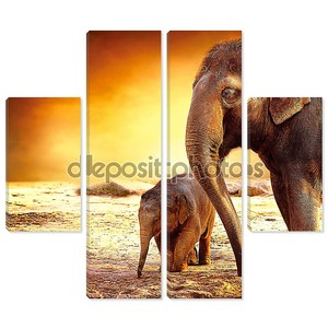Слон матери и ребенка на открытом воздухе