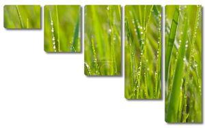 Свежая утренняя роса на траве весной
