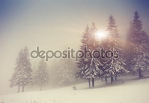 Вечер зимний пейзаж