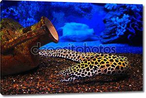 подводные объекты: рыба, кувшин, shell