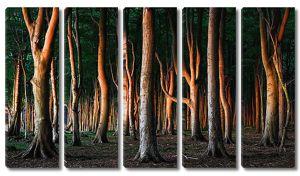 Деревья с яркой корой