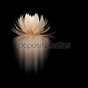 Цветок лотоса на черном фоне