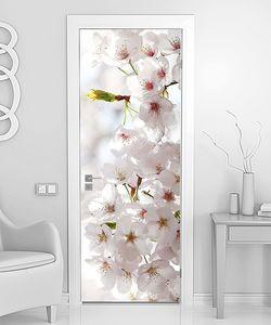 Буйно цветущая вишня