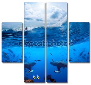 Серфер на волне и двух диких акул под водой