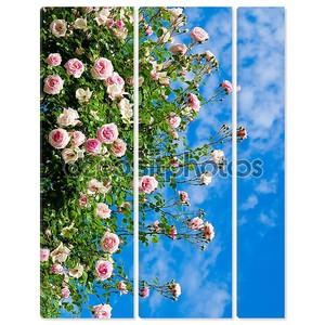 Розы против голубого неба.