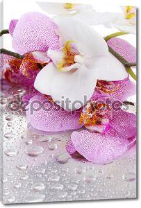 Розовые и белые орхидеи
