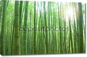 Зеленый бамбуковый лес с солнечным светом