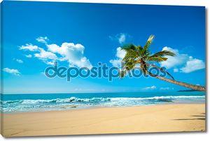 Тропический пляж в Шри-Ланке