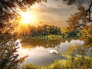 лебедь на водоеме