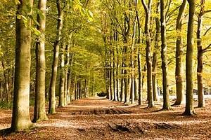 Грунтовая дорога в осень, Нидерланды
