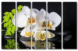 Красивый спа Настройка отрубей Белая орхидея (фаленопсис), зеленый