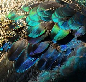 Перья птицы крупно