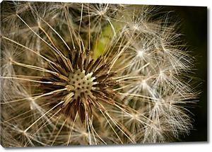 Цветение одуванчика