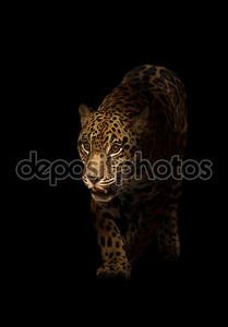 Ягуар (panthera onca) в темноте