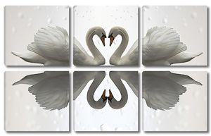 Пара белых лебедей