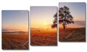 Только дерево на лугу на закате солнца и туман - Панорама