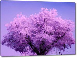 Пышно цветущее дерево