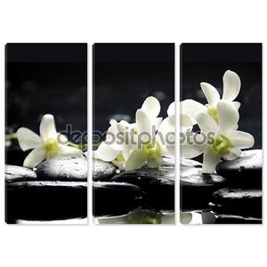 Камни и Белая орхидея