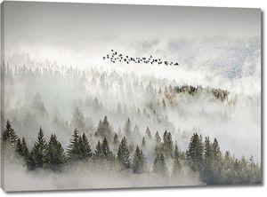 Лес в облаках