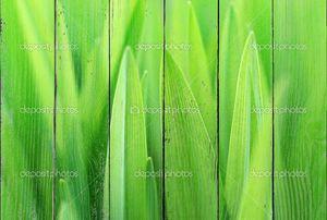 закрыть зеленой травы