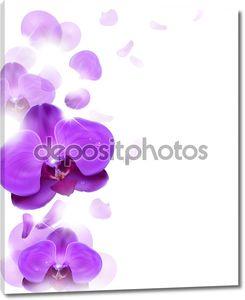 Цветочный фон фиолетовая орхидея