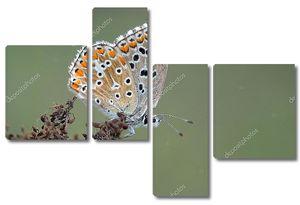 Красивая бабочка на сухой траве