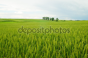 Сельский пейзаж из Польши.