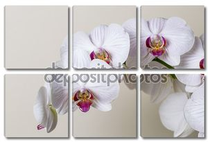 Розовый цветок орхидеи спа белый Флора цветок подарок косметику обслуживание украшения цветок Валентина