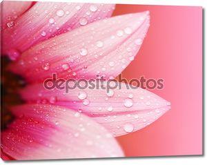абстрактные цветочные лепестки