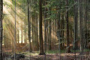 Осенние деревья, лес