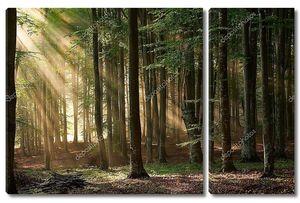 Осенние деревья, лес. Природа стола Зеленый дерево солнечного света