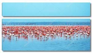 Стаи фламинго на озере